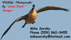 Lame Duck Images
